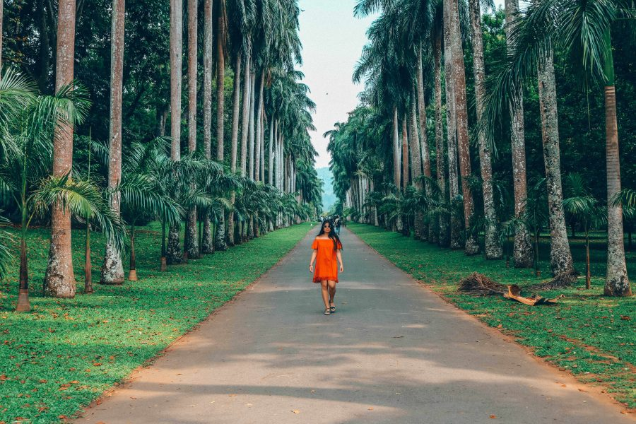 the avenue of royal palms.