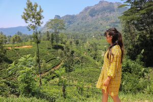 Tea plantation view