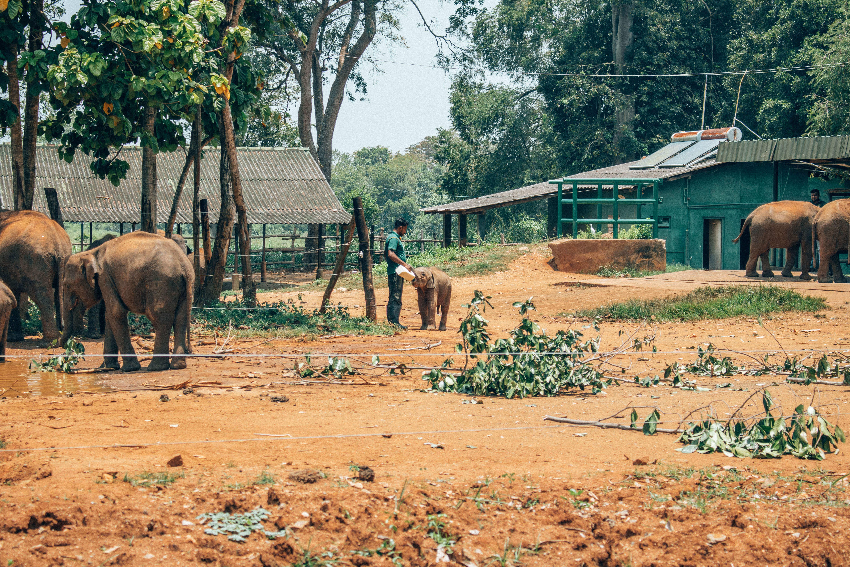 baby elephant feeding time