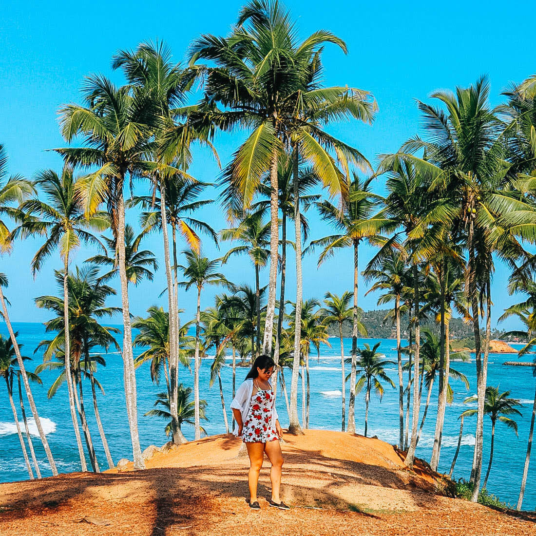 Bekende instagram palmbomen